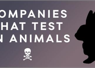 Laboratorios con productos testados en animales