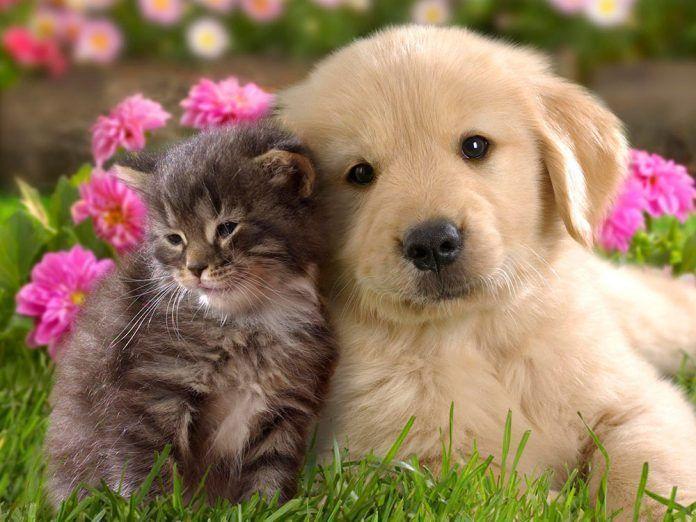 protección de animales de compañía