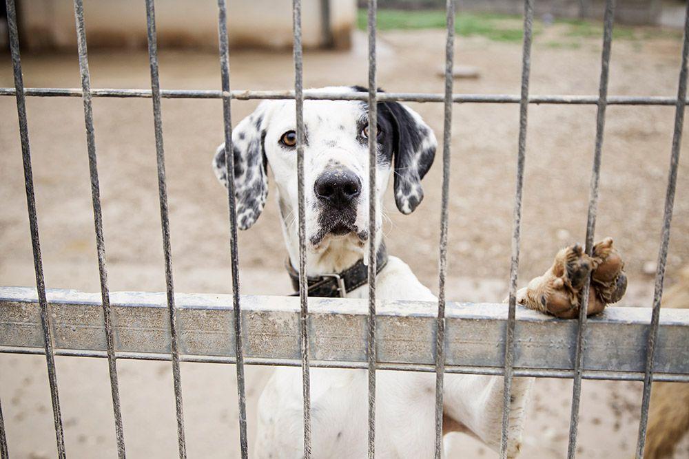los animales no son cosas balcón vegano