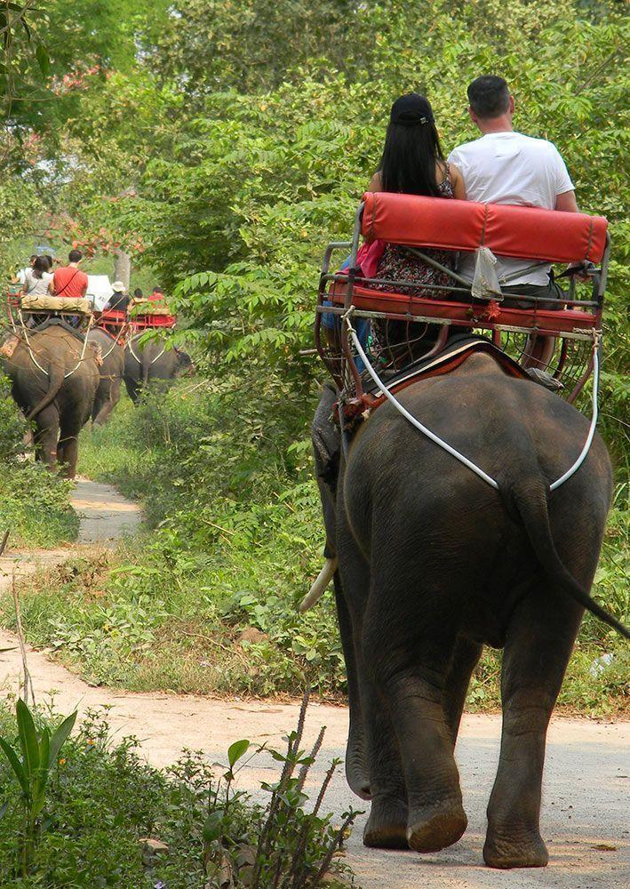 elefantes explotación