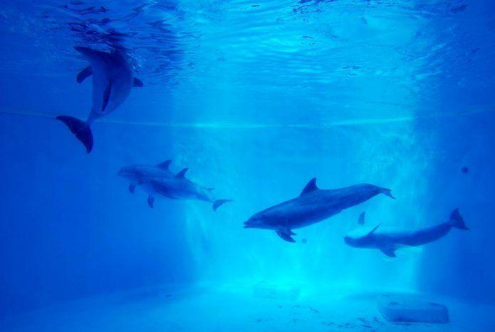 Por el fin de la cautividad de los cetáceos