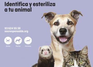 Soy Responsable: La identificación y la esterilización de animales como herramientas fundamentales de tenencia responsable para integrarlos en la sociedad