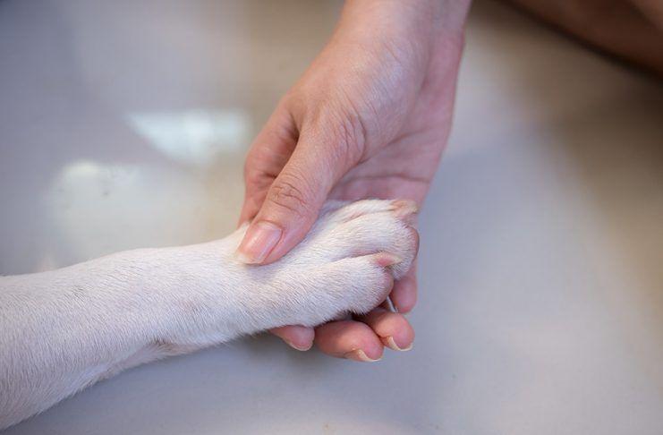 Un paso adelante, los animales seres vivos dotados de sensibilidad