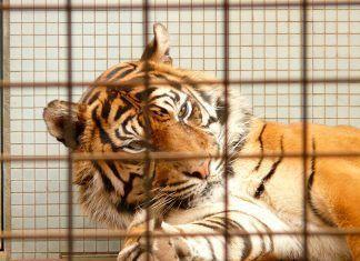 Detrás del uso de animales salvajes en cautividad para producciones cinematográficas, publicitarias y espacios televisivos de entretenimiento, se esconde una vida de maltrato y crueldad.
