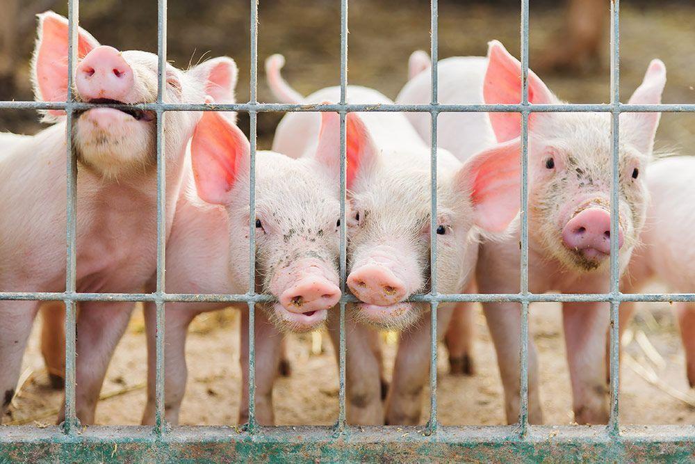 Veganismo. La solución a la inseguridad alimentaria