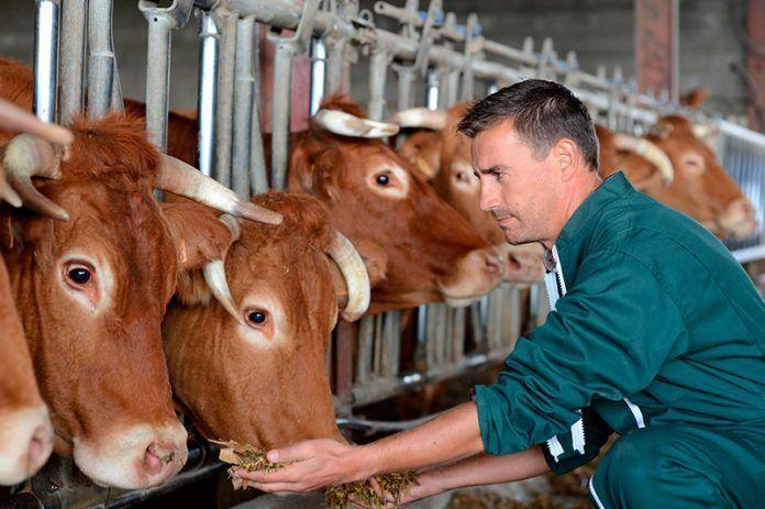 ganadería medio ambiente