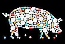 Leche OGM pastillas transgénicos