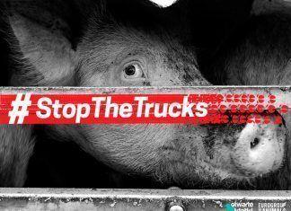 Stop the trucks transportes de animales