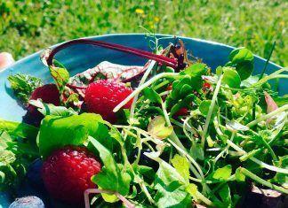 Ensalada silvestre frutas silvestres alimentación vegana