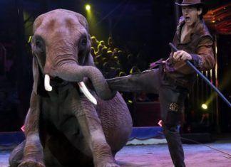 galicia circos con animales