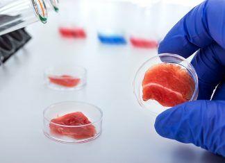 carne de laboratorio volver a comer carne