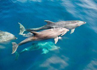 los delfines no sonríen