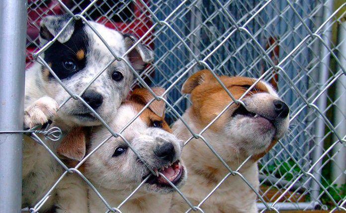 Sin voz ni voto La venta indiscriminada de animales en internet: una gran puerta que fomenta el comercio ilegal