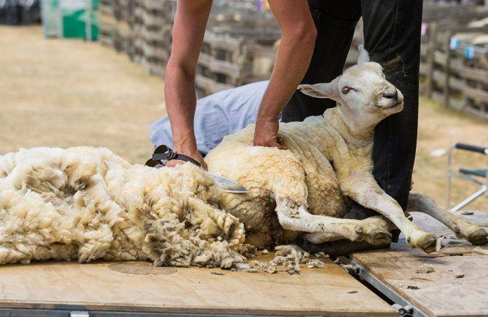 qué hay de malo en la lana