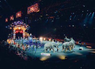 4 nuevos municipios libres de circos con animales