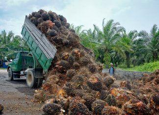 El alto precio del aceite de palma
