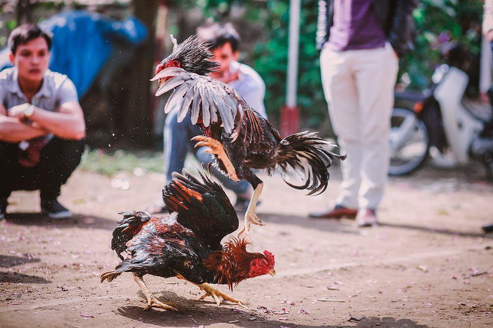 El inicio de los festejos populares libres de sufrimiento animal