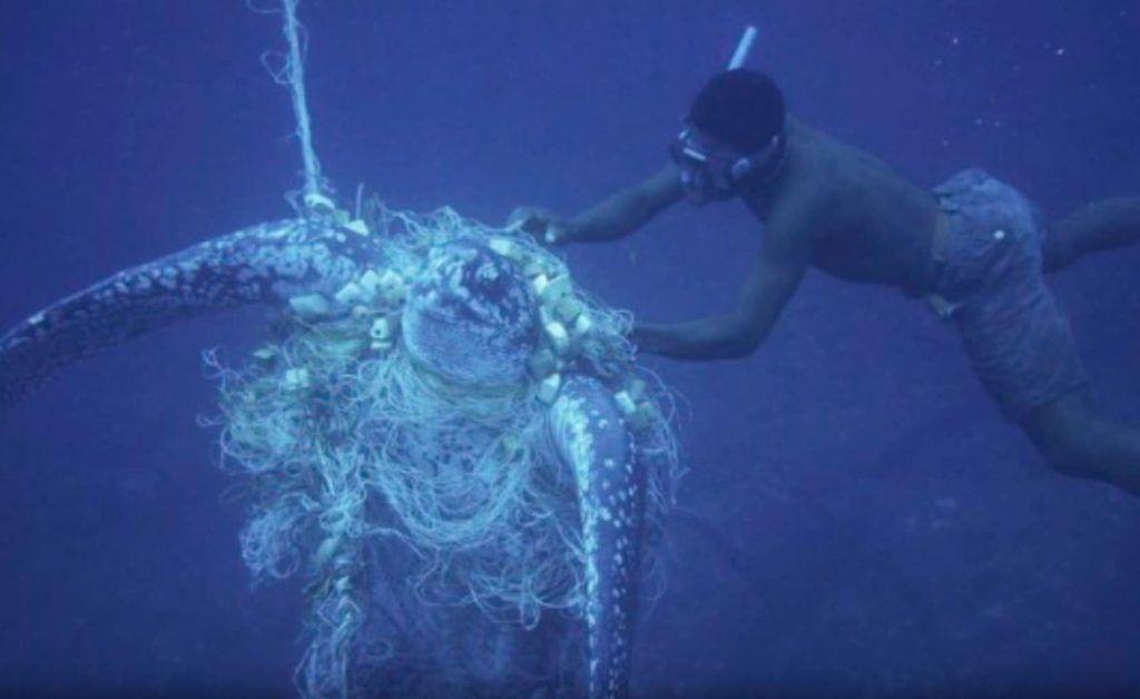 Peces y crustáceos, los grandes olvidados cuando hablamos de respeto animal
