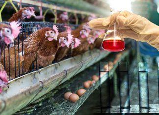Objeción de conciencia veganismo