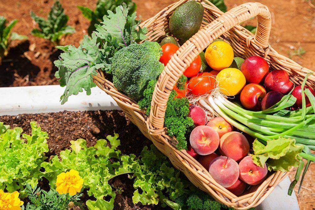 Alimentación y cáncer Papel de la alimentación en el desarrollo del cáncer