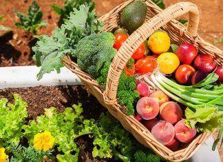 Alimentación y cáncer