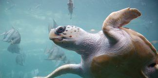 ¡Bienvenidas tortugas bobas!