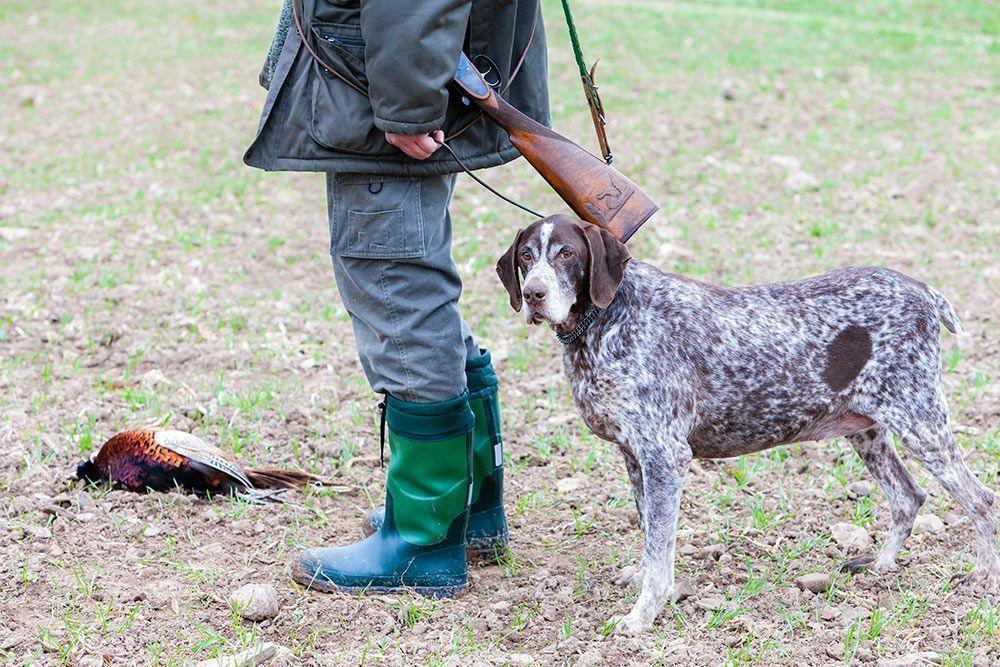 """""""Más del 40% de los perros maltratados en España son perros de caza"""""""