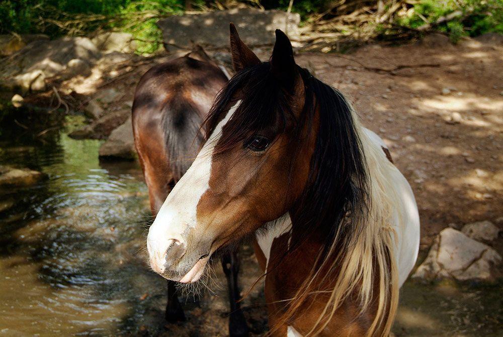 Los caballos, animales tan nobles y cercanos, a la vez tan abusados