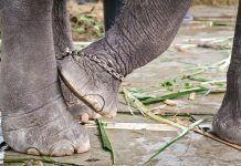 La violencia hacia los animales sigue su camino hasta repercutir en toda la sociedad