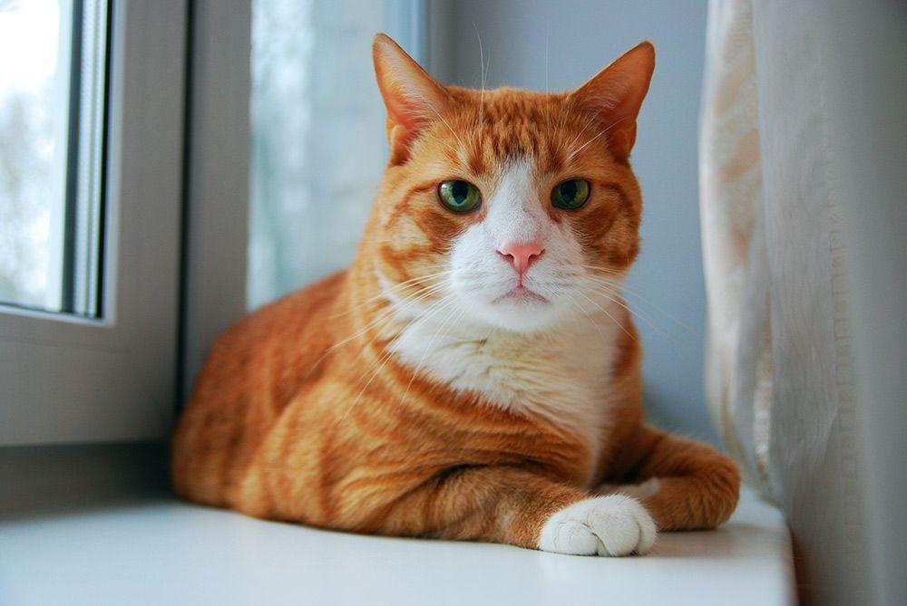 gatos bienestar