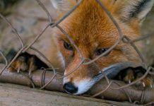Sondeo general del Derecho Animal: ¿Se encuentran los animales (y cuáles) protegidos por la ley estatal?