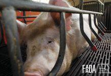 Acabar con la cría de animales en jaula