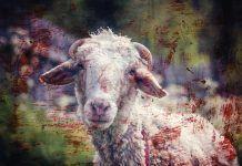 Ropa sin sangre ropa vegana