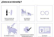 soy responsable Una campaña efectiva para identificar y esterilizar animales