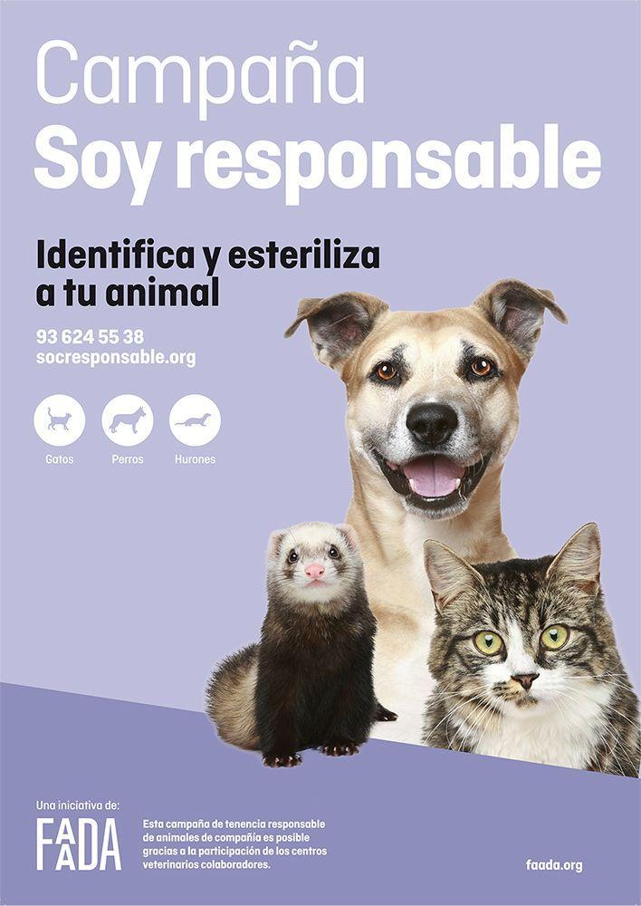 Una campaña efectiva para identificar y esterilizar animales