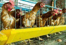Falsos mitos sobre el consumo de huevos y alternativas veganas