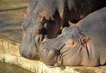 La situación de los parques zoológicos en España