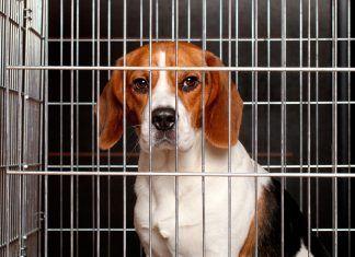 Hacia la abolición de la compra venta de animales