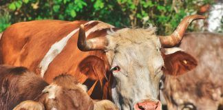 Coger el toro por los cuernos. Por David Román.