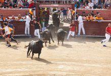 Los correbous regresan a la agenda política del Parlamento de Cataluña