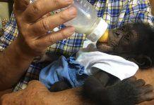 InfoZOOSalerta de las malas prácticas de tres zoos en Andalucía