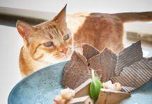 Disfrutar comiendo entre gatos en Roma
