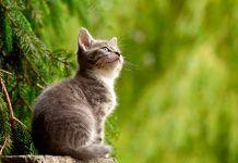 Escoger el gato apropiado según su naturaleza y nuestro estilo de vida