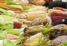 Alimentación en las civilizaciones precolombinas