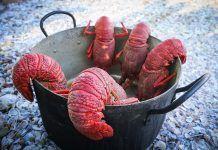 Hablemos de langostas y otros crustáceos
