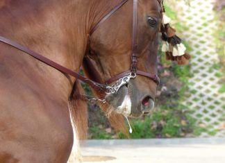 Hacia el fin del uso de animales en cabalgatas y desfiles