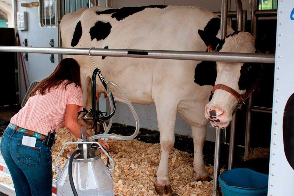 Lácteos: ni esenciales ni tan siquiera beneficiosos