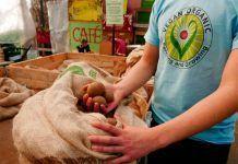 Permacultura vegánica: agricultura para sanar el mundo