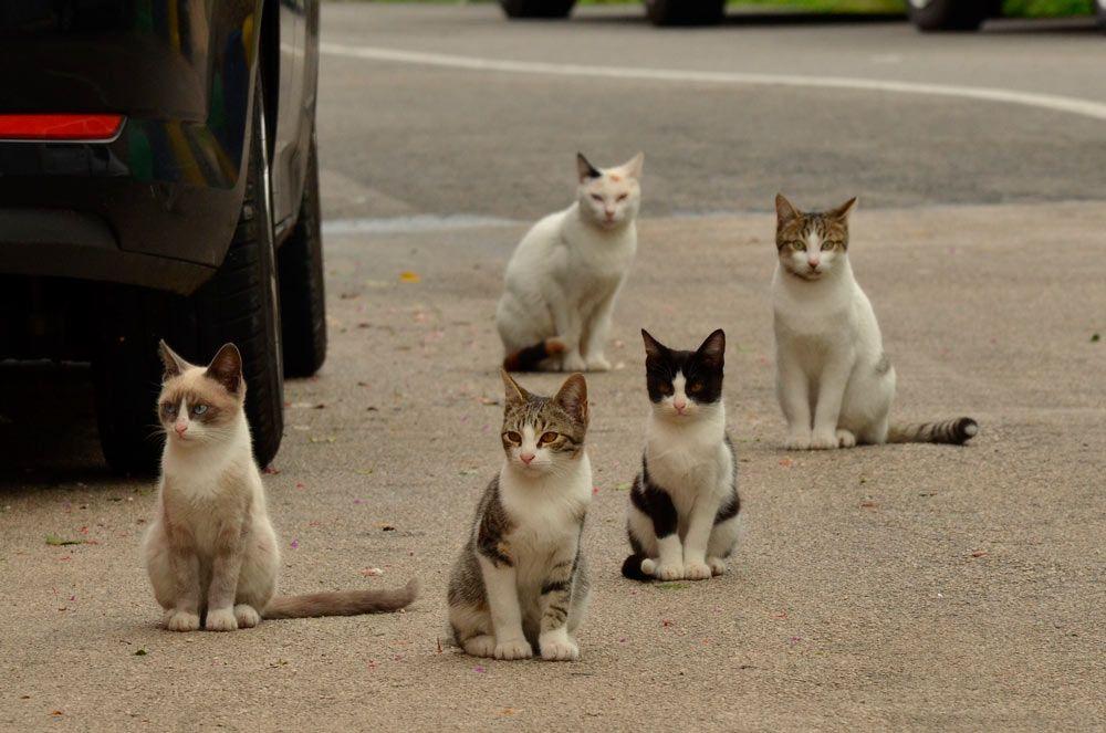 Cómo gestionar ética y eficazmente las colonias de gatos