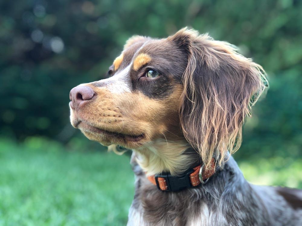 Europarlamentarios piden a España que proteja a los perros de caza